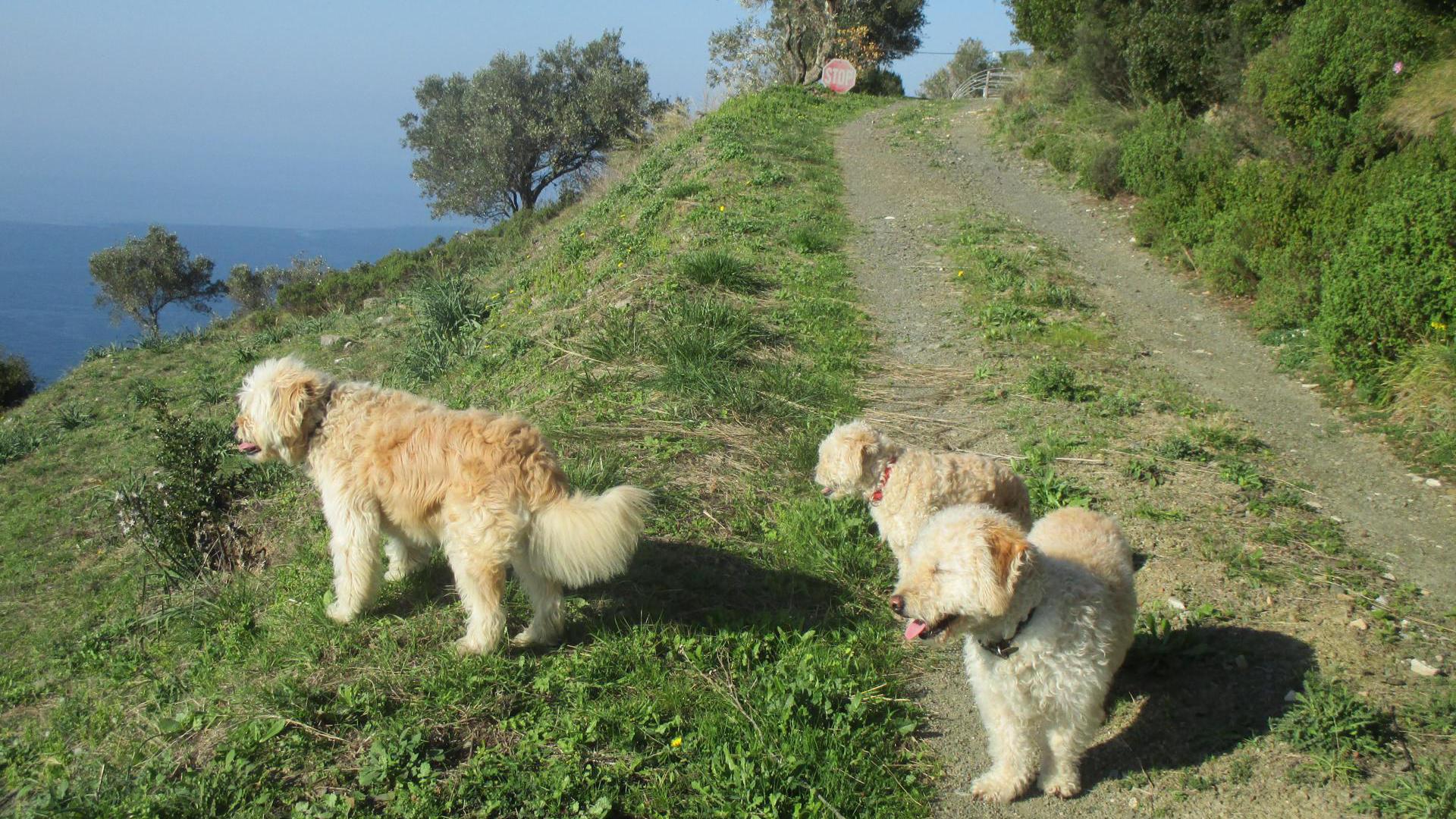 Walking Tour: Patitiri - Old Town - Alonia Circus - Yalia - Vouno - Mega Nero - Patitiri 01